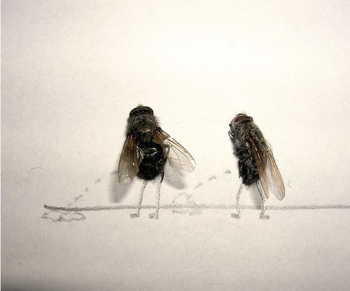 Dead Flies Art (15 pics) » AcidCow.com - videos, pictures, celebs, flash games
