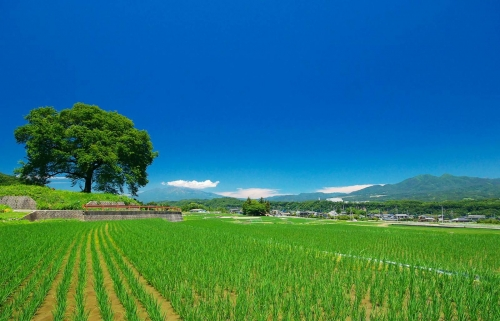 green & blue sky. Photo at Japan.
