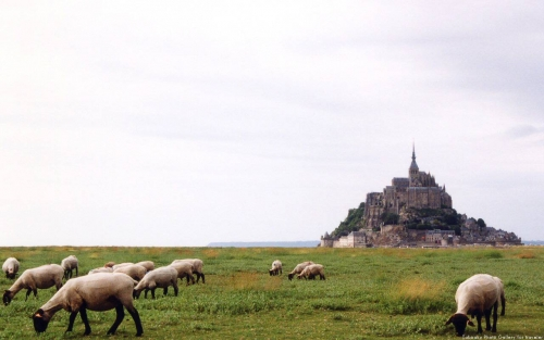 Mont Saint-Michel & Sheep