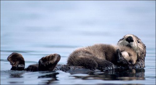 Baby otter takes mum for a ride | The Sun |News