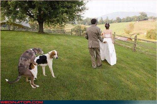 WEDINATOR - Trashing Your Special Day is our Prime Directive