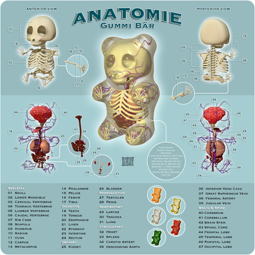 The Anatomy of A Gummy Bear [PIC]