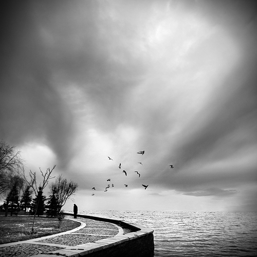 ...for i could not fly away by ThyMournia