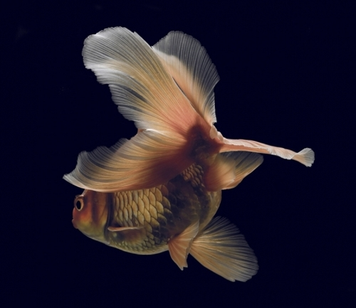 Fish-The World's Best Images.