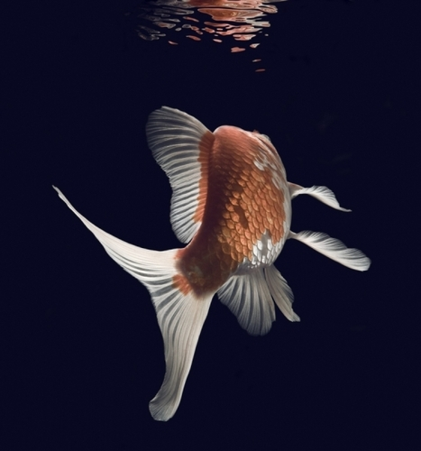 Fish- The World's Best Images.