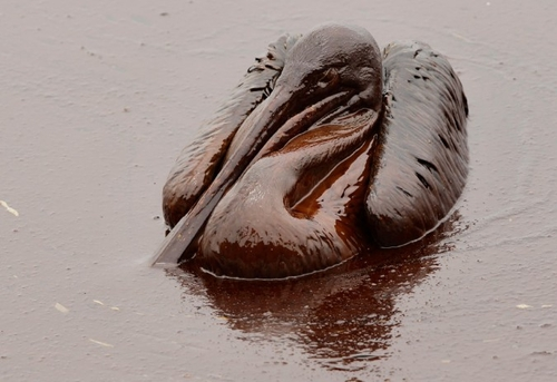 What BP Doesn't Want You To See From Their Oil Spill