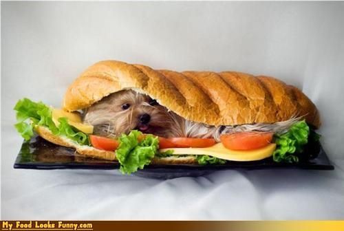 My Food Looks Funny - Funny Food Photos - Page 6