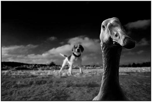 40 Beautiful Example of Black and White Photography