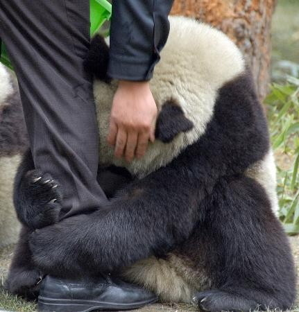 Panda terrified after earthquake in Cleveland