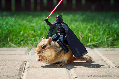 Darth Vader on a Chipmunk is not Photoshopped