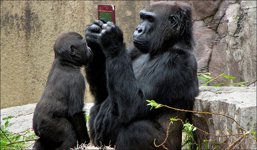 A Gorilla plays with a Nintendo DS in San Francisco Zoo !