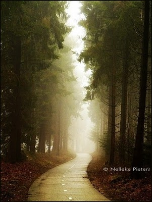 Gotchic Nature Photography by Nelleke Pieters | Professional Photography Blog