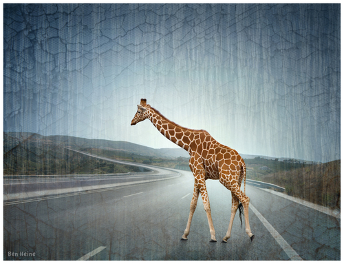 Lost Giraffe on the Highway Ben Heine