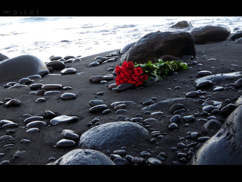 roses by maidreamz #message