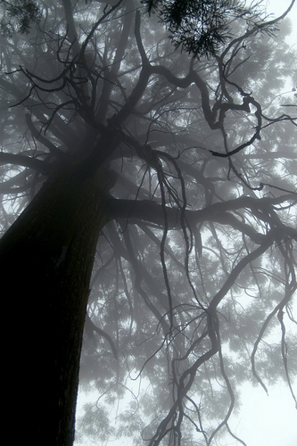 a huge tree in Lushan