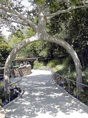 18 Beautiful and Strange Trees ~ Now That's Nifty