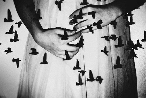 Birds - Photographie de Sarah Rose Smiley