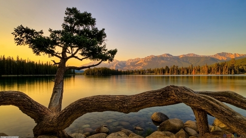 tree_lake_and_stones_landscape