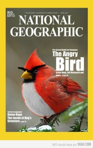 Même le National Geographic !