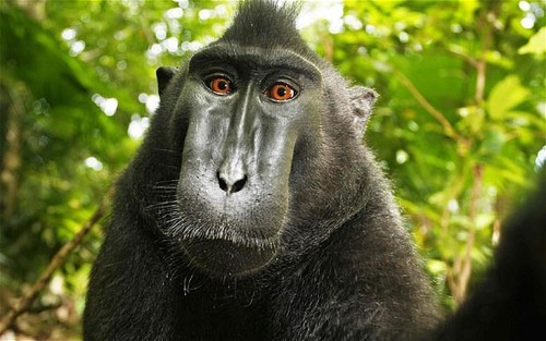 Monkey steals camera to snap himself - Telegraph