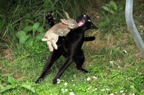 Oh, it's just a harmless little bunny, isn't it? Well, it's always the same. I always tell them..