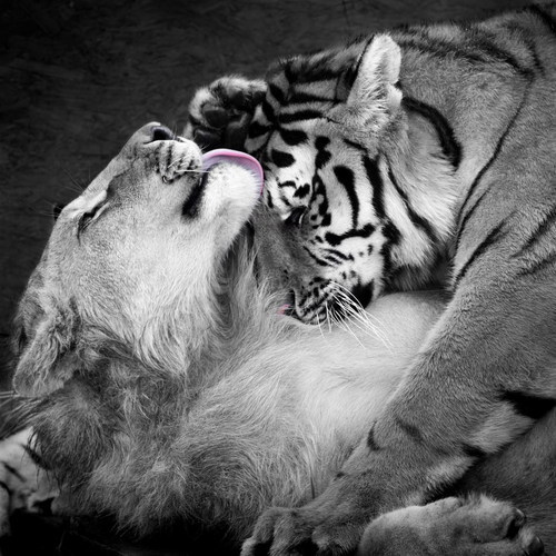 Feline Tenderness