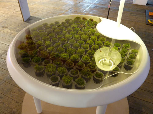 Moss Table #design