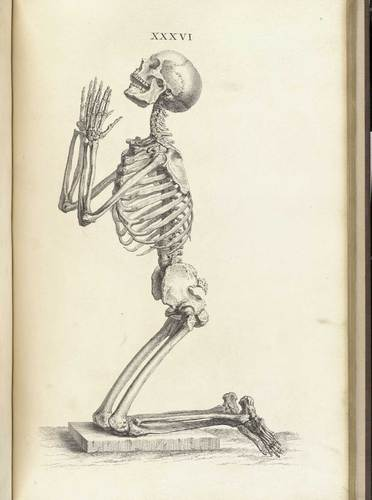 William Cheselden: Osteographia, or The anatomy of the bones, 1733