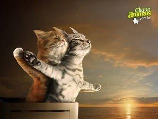 Titanic version Miaou