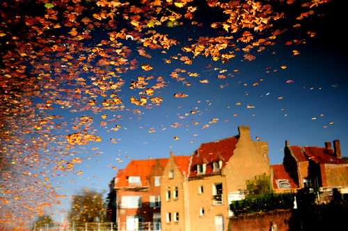 FALLING LEAVES - National Geographic Photo Contest 2011