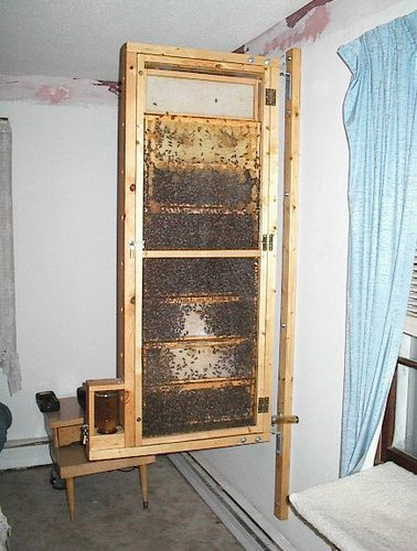 the things we like, make and do.: Observation Hive In 2003