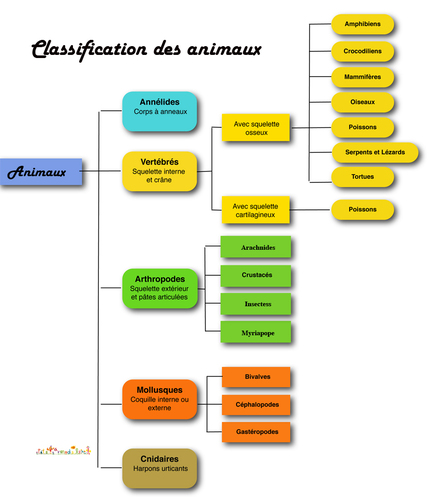 classification-des-vivants.jpg (Image JPEG, 827x965 pixels)