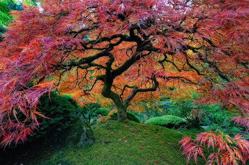 japanese garden in portland photo | one big photo