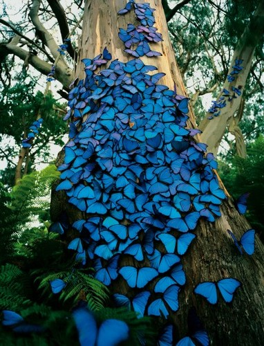 The Butterfly Effect & You