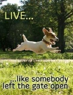 Live... like somebody left the gate open