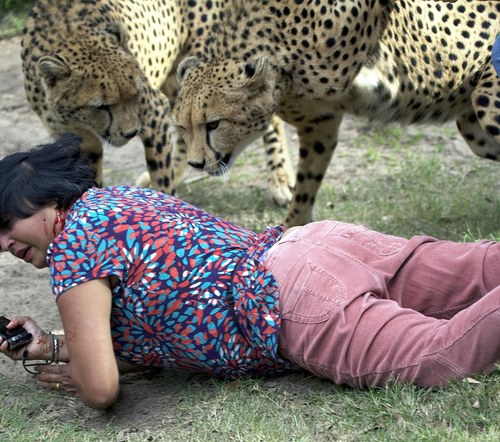 Violet D'Mello mauled by 'tame' cheetahs at holiday safari park