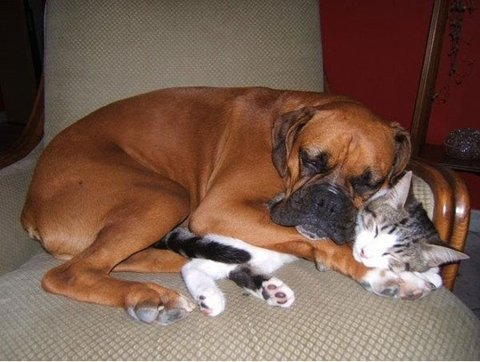 Dogs And Cats Napping Together