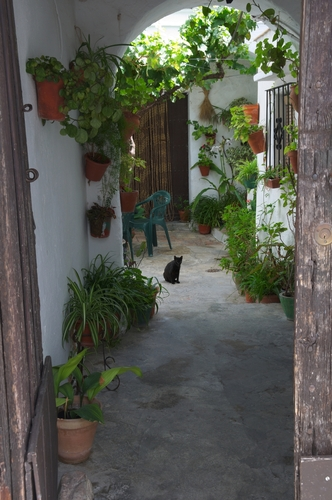 Chat dans un patio andalou