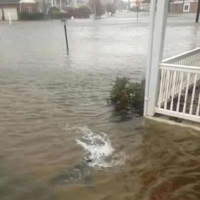 #sandy #hurricane #requin #flooding