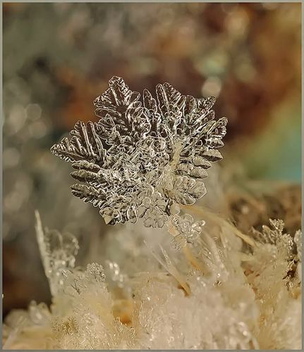 Photo Macro de Flocons de neige