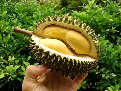 Durian (King Fruit)