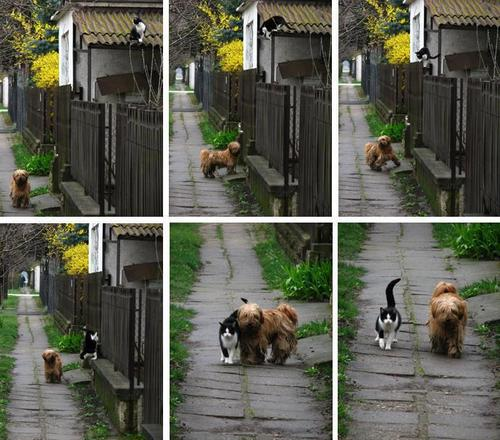 Awesome friendship