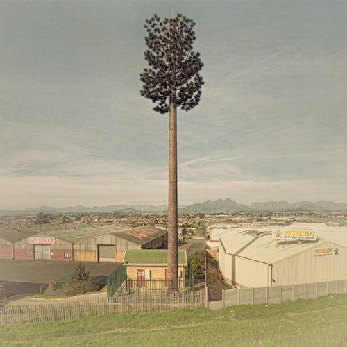 Photos of Cell Phone Towers Disguised as Fake Trees