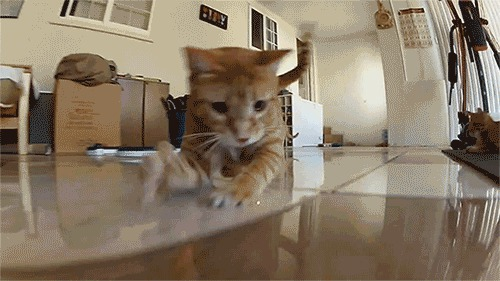 Cats-love-chasing-lasers-