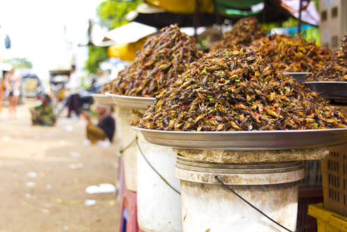 Why, How, and Where You Should Start Eating Bugs