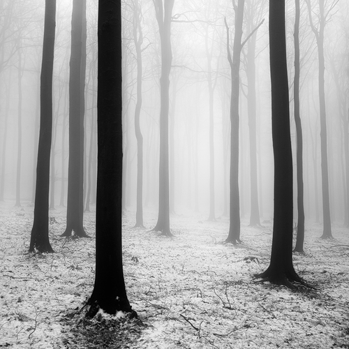 Forest Harmony, photography by Martin Rak