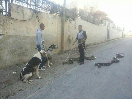 'Just out, y'know, walking my fucking snakes'