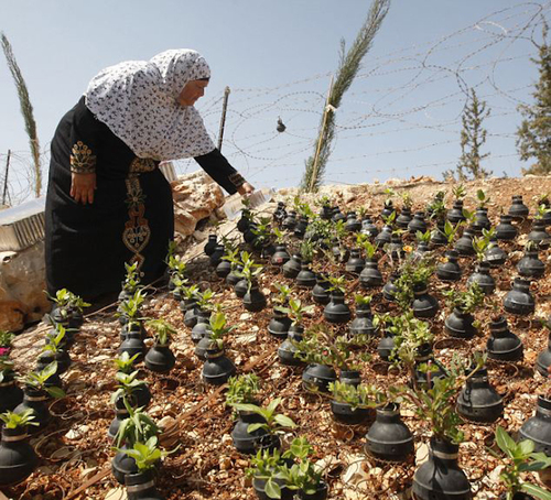 Palestinian Villagers Plant Memorial Garden Using Old Tear Gas Canisters