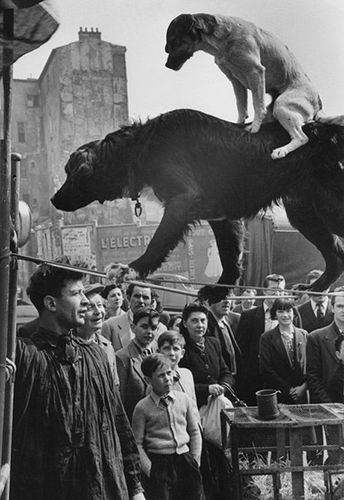 "Marc Riboud. ""Two Dog Acrobats"". 1953. Paris, France. S)"