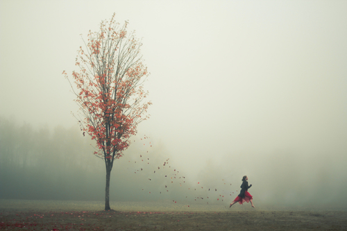 Elizabeth Gadd Photography